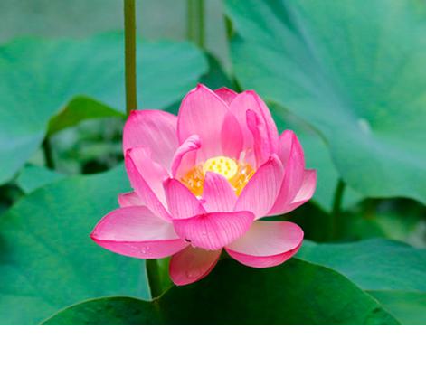 Praktik Budhist